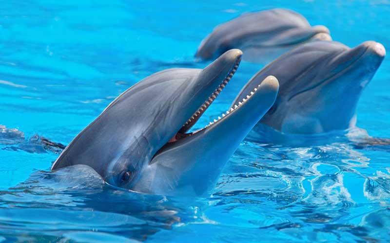 Especies-de-delfines-en-el-mundo 1