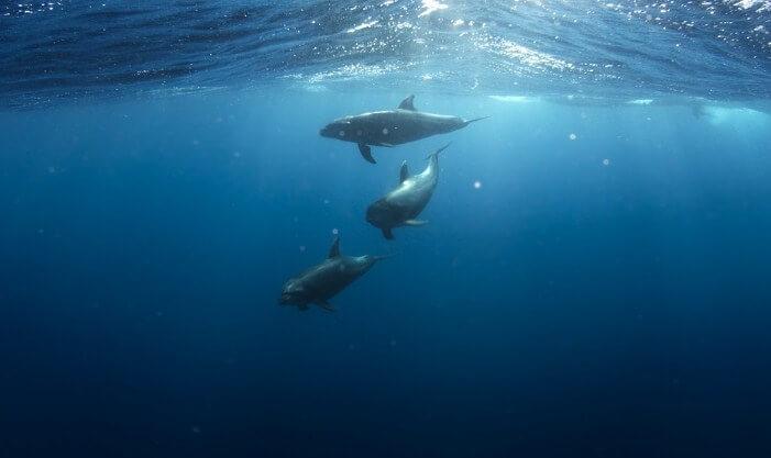 especies de delfines en el mundo