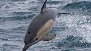 tipos de delfines