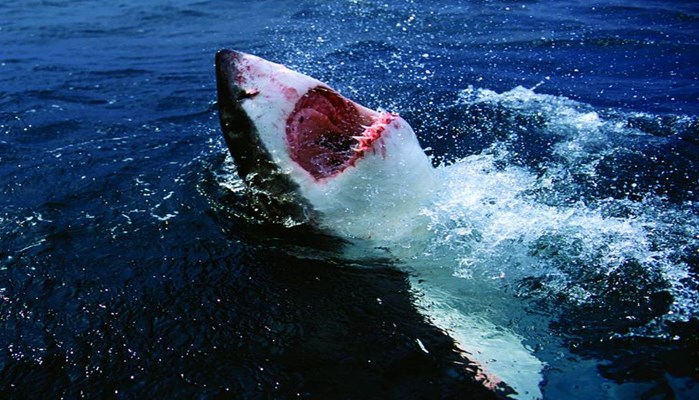 Conclusiones sobre cómo respiran los tiburones