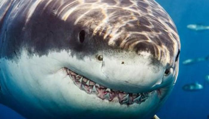 Las excepciones aplicadas en método de cómo respiran los tiburones
