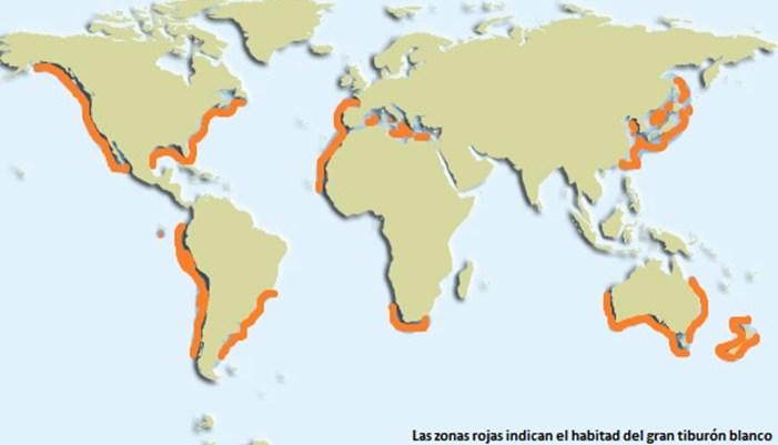 hábitat los tiburones blancos
