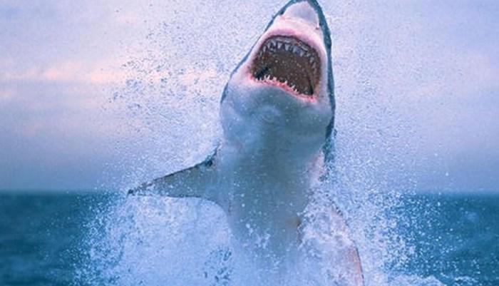 Los ecosistemas de los tiburones blancos