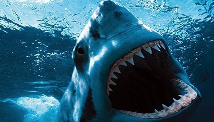 La atracción del tiburón blanco